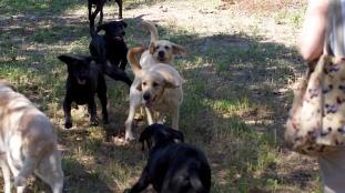 pups on the run