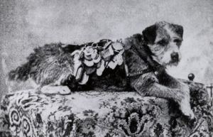 owney_postal_dog