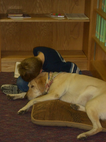 library dog 041