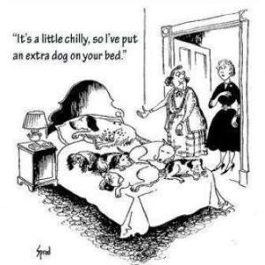 dogs on the bed